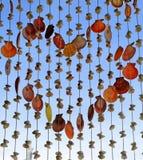 Coeur Shell Curtain Images libres de droits