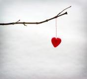 Coeur simple accrochant sur une branche d'arbre en hiver Images stock
