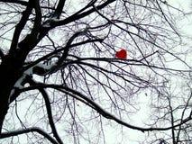 Coeur sur l'arbre Photographie stock