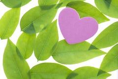 Coeur sur les feuilles vertes Photo libre de droits