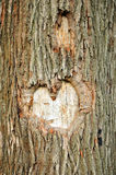 Coeur sur un arbre Photos stock