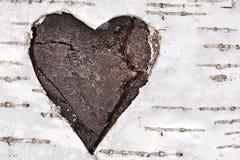 Coeur sur un arbre de bouleau Photographie stock libre de droits