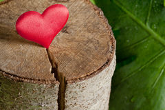 Coeur sur une coupe d'arbre Images libres de droits