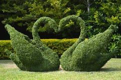 Coeur topiaire d'amour de cygnes Image libre de droits