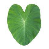 Coeur vert image libre de droits