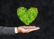 Coeur vert Photographie stock libre de droits