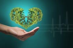 Coeur vert dans des mains Photos stock