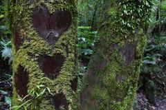 Coeurs d'amour sur l'arbre Images libres de droits