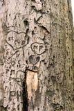 Coeurs dans un arbre mort Photographie stock