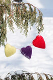 Coeurs de jour de valentines pendant du pin en hiver Photo libre de droits