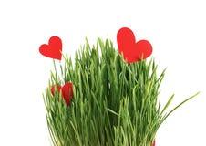 Coeurs de papier dans l'herbe Photos libres de droits