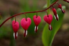 Coeurs en nature Photo libre de droits