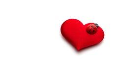 Coeurs et coccinelle pour le jour de valentines Image stock