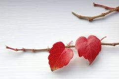 Coeurs rouges Image libre de droits