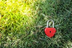 Coeurs rouges principaux sur la pelouse, le concept de l'amour et Valentine& x27 ; s Photo stock