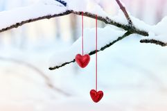 Coeurs rouges sur la branche d'arbre neigeuse en hiver Concept heureux d'amour de coeur de célébration de jour de valentines de v Photographie stock libre de droits