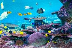 coex钓鱼oceanarium torpical的汉城 免版税图库摄影