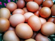 Close-up view of raw chicken eggs. Cof close-up view raw chicken eggs stock photos