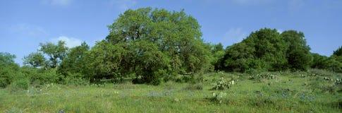 Cofani blu in alpeggio, Willow City Loop Road, il Texas Immagine Stock