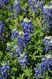 Cofano blu Fotografie Stock