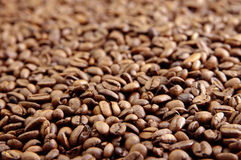 Cofee beans. Background in the day royalty free stock photo