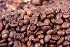 Cofee beans. A lot of organic cofee beans royalty free stock photography