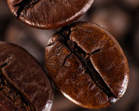 Cofee beans. Against blurred abstracr backgrounds stock photos