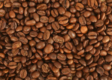 Cofee beans. A lot of organic cofee beans stock images