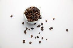 Cofee cru Photo stock