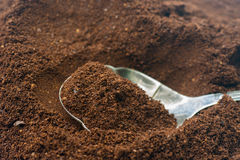 Cofee de tierra en la cuchara de plata Fotografía de archivo
