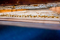 Cofee fasoli zbliżenie Zdjęcia Stock