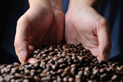 Cofee grains Stock Photography