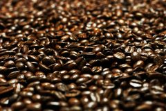 Cofee Grains (Shallow DOF). Lots of dark coffee grains (Shallow DOF Royalty Free Stock Photos