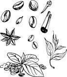 Cofee krydda också vektor för coreldrawillustration Arkivbild