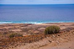 Cofete beach vegetation Stock Images
