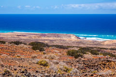 Cofete beach vegetation Stock Photo