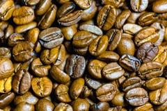 Coffe杯子和种子 库存图片