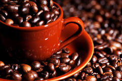 Coffe. Beans in cup on e background Royalty Free Stock Photography