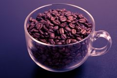 Coffe. Cup of roasted coffe beans stock image
