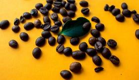 Coffe bönor och grönt blad fotografering för bildbyråer