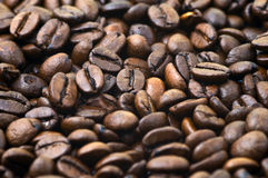 Coffe bean. In close-up royalty free stock photo