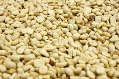 Coffe Bean Stock Image