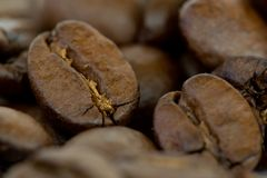 Coffe bean closeup. Grains of brown coffe. Closeup of some grains of coffe stock photography