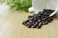 Coffe bean Royalty Free Stock Image