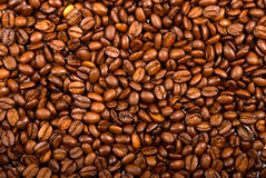 Coffe beans background Stock Image