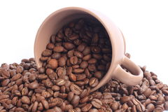 Coffe beans and cup. A cup in a pile of coffe beans on white background royalty free stock image