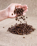 Coffe beans falling from the hand Royalty Free Stock Photo