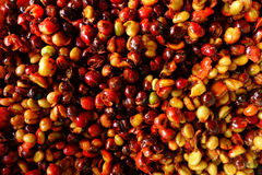 Coffe beans and fresh berries beans Stock Photos