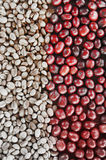 Coffe beans and fresh berries beans backgourng Stock Photo