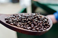 Coffe Beans freshly roasted in Costa Rica Royalty Free Stock Image
